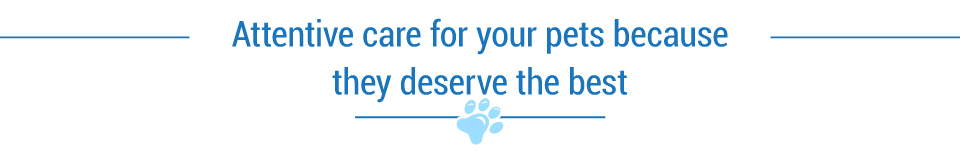 Attentive care for your pets because they deserve the best