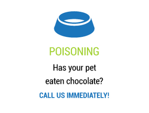 Poisoning - Has your pet eaten chocolate? Call us immediately!