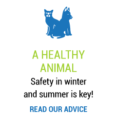 A healthy animal Safety in winter and summer is key! Read our advice